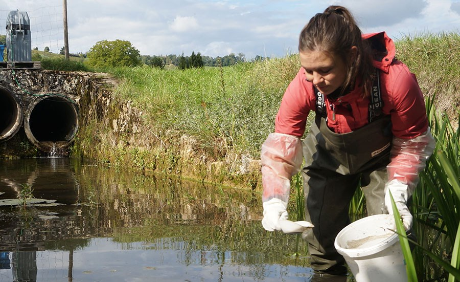 Ecotoxicological effects of pesticides in stream sediments