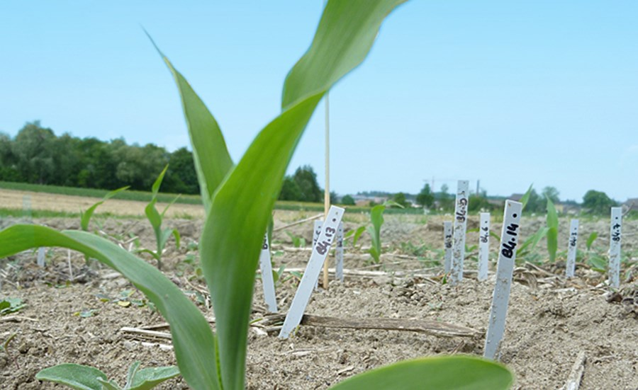 Assessing Biological Activity of Soil Organisms under Different Agricultural Practices Using the Bait Lamina Method