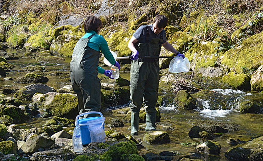 Biomarkers in rainbow trout for assessing harmful chemical effects in surface waters